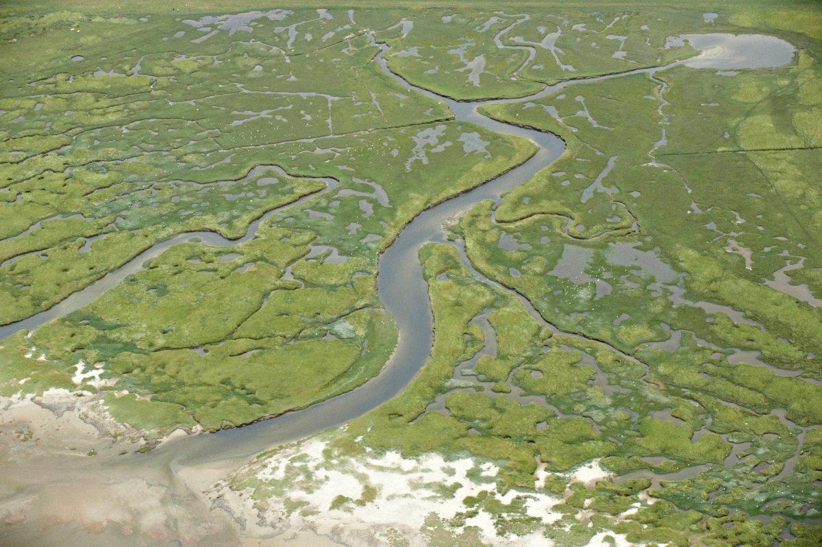 Mandø Lars Gejl Nationalpark Vadehavet